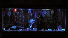 Светодиодное освещение в аквариумистике